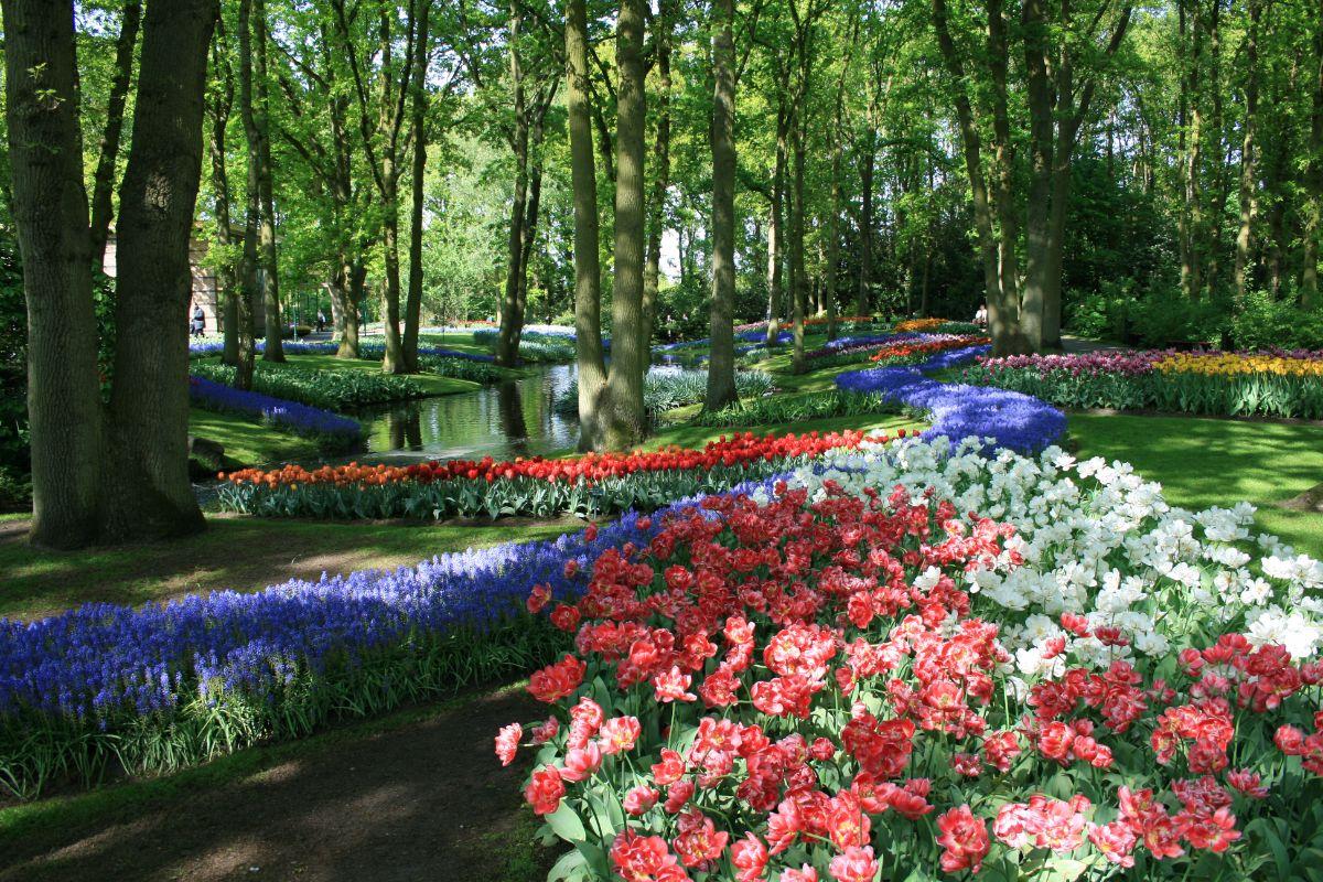 Седум, очиток цветы. Фото 54